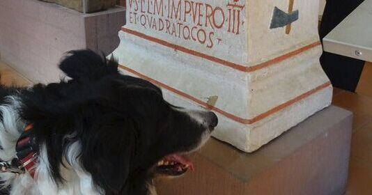 Academic Coaching, Essay doctor, Roman inscriptions, Saalburg, polychrome, Border Collie 2019